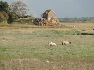 Le fortin en été avec des moutons qui broute